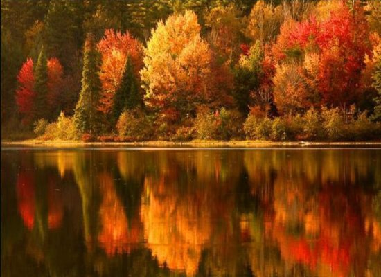 Fall is a time for renewal!